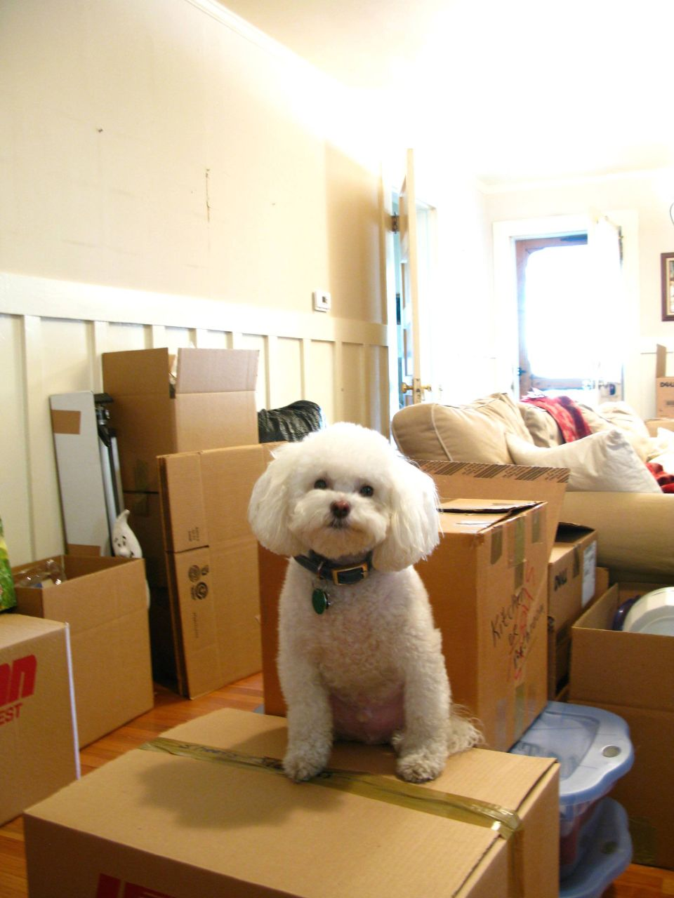 moving-house-flickr